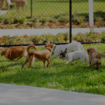 Large Dog Park at Imperial Tower Apartments